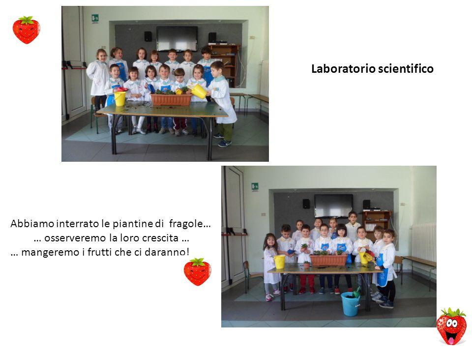 Laboratorio scientifico Abbiamo interrato le piantine di fragole… … osserveremo la loro crescita … … mangeremo i frutti che ci daranno!