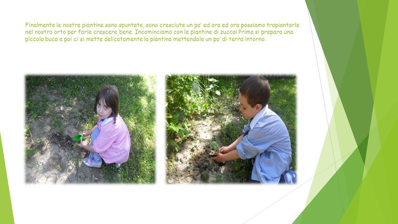 Non rimane che innaffiare e posizionare i cartelli che indicano il tipo di pianta presente nell'orto.