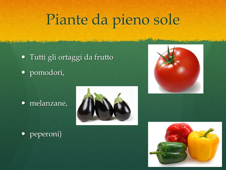 Piante da pieno sole Tutti gli ortaggi da frutto Tutti gli ortaggi da frutto pomodori, pomodori, melanzane, melanzane, peperoni) peperoni)