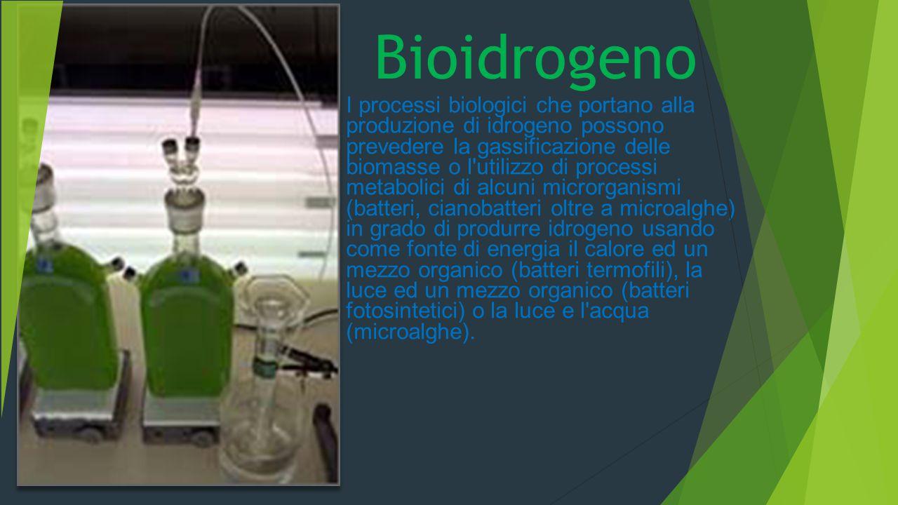 I processi biologici che portano alla produzione di idrogeno possono prevedere la gassificazione delle biomasse o l'utilizzo di processi metabolici di