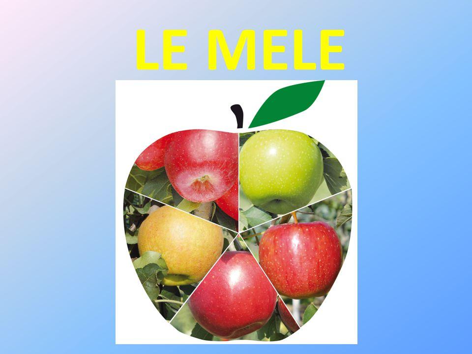 UTILIZZI E PROPRIETA' Le mele sono frutti deliziosi, che si prestano a numerosi impieghi sia crude che cotte.