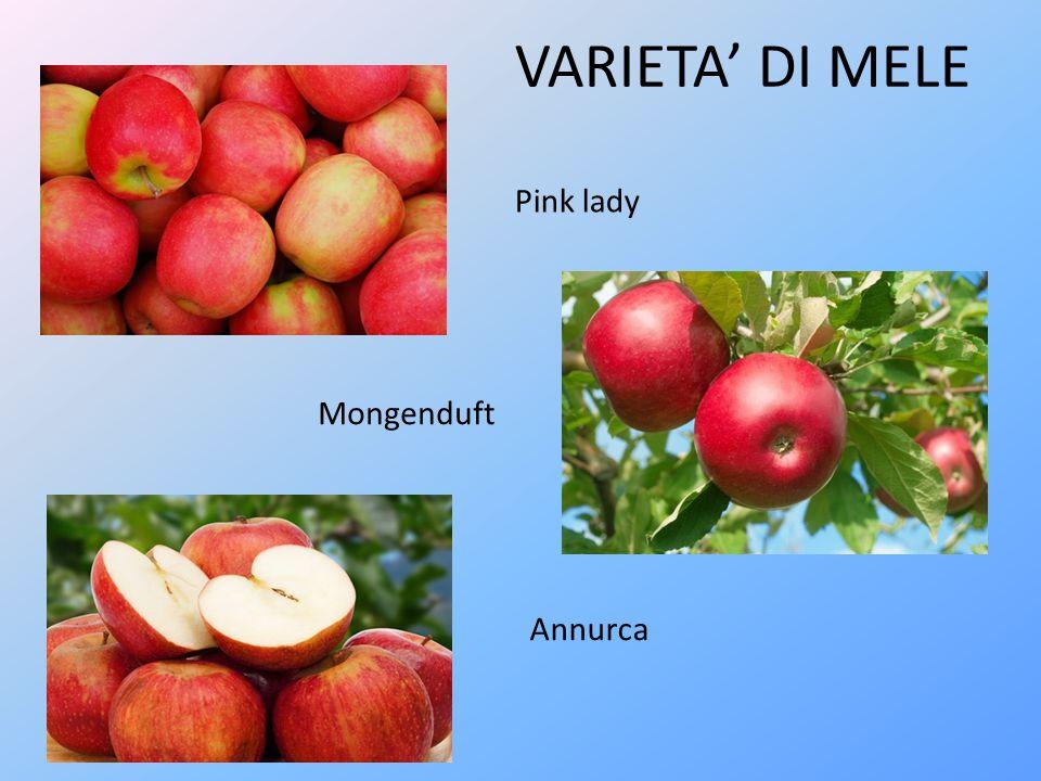 Renetta Golden delicious Braeburn VARIETA' DI MELE
