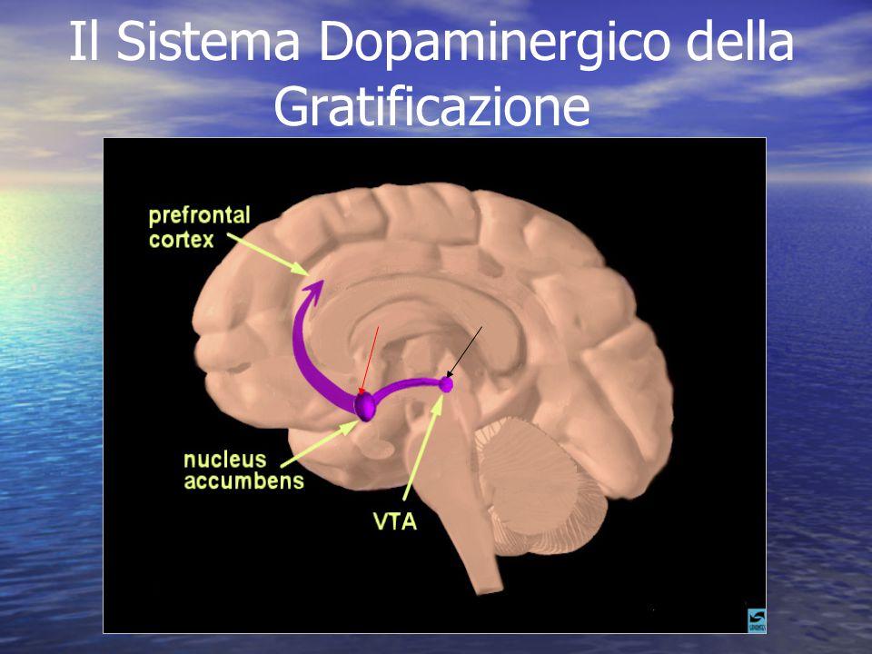 Il Sistema Dopaminergico della Gratificazione