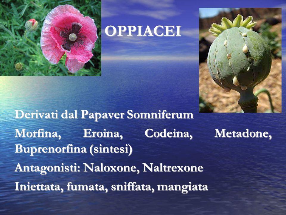 OPPIACEI Derivati dal Papaver Somniferum Morfina, Eroina, Codeina, Metadone, Buprenorfina (sintesi) Antagonisti: Naloxone, Naltrexone Iniettata, fumat