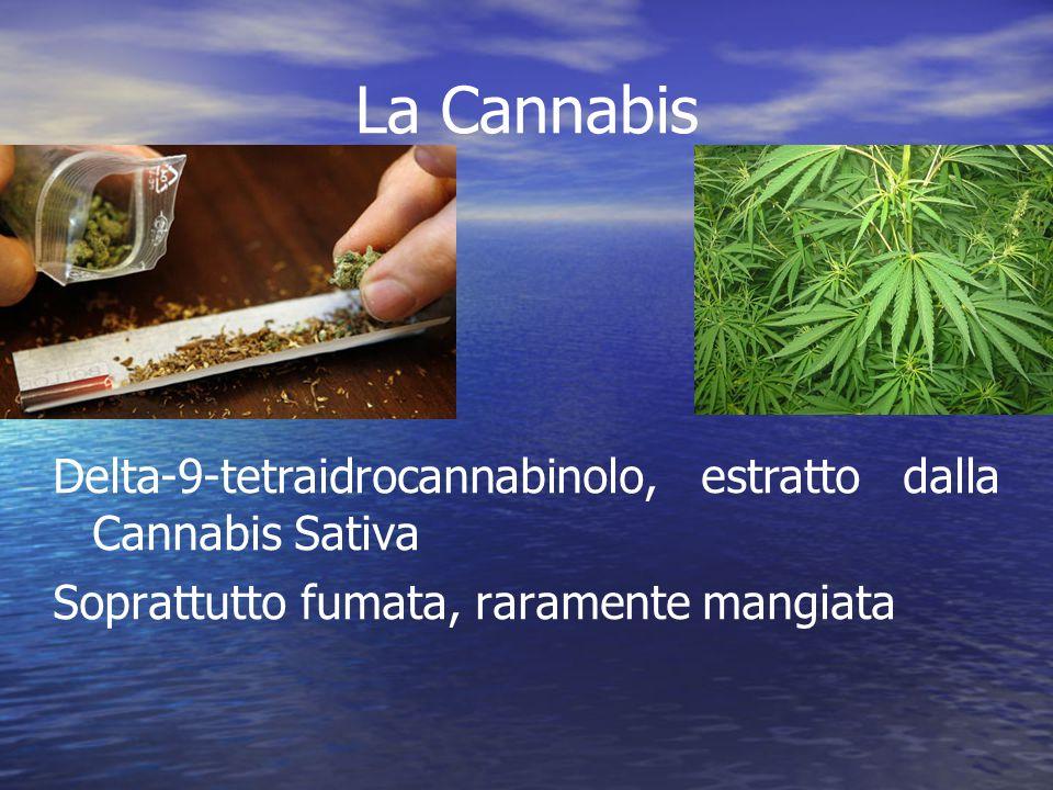 La Cannabis Delta-9-tetraidrocannabinolo, estratto dalla Cannabis Sativa Soprattutto fumata, raramente mangiata