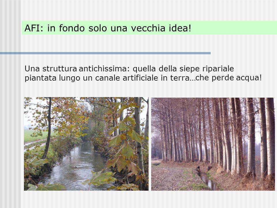 AFI: in fondo solo una vecchia idea! Una struttura antichissima: quella della siepe ripariale piantata lungo un canale artificiale in terra… che perde