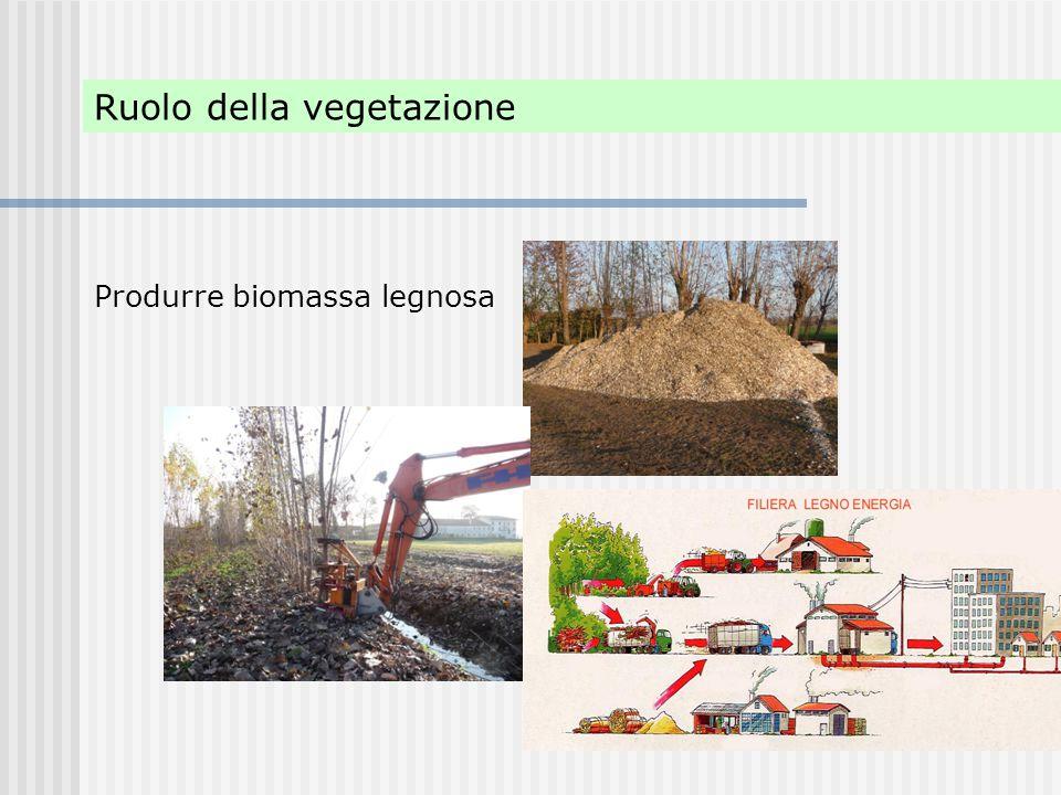 Ruolo della vegetazione Produrre biomassa legnosa