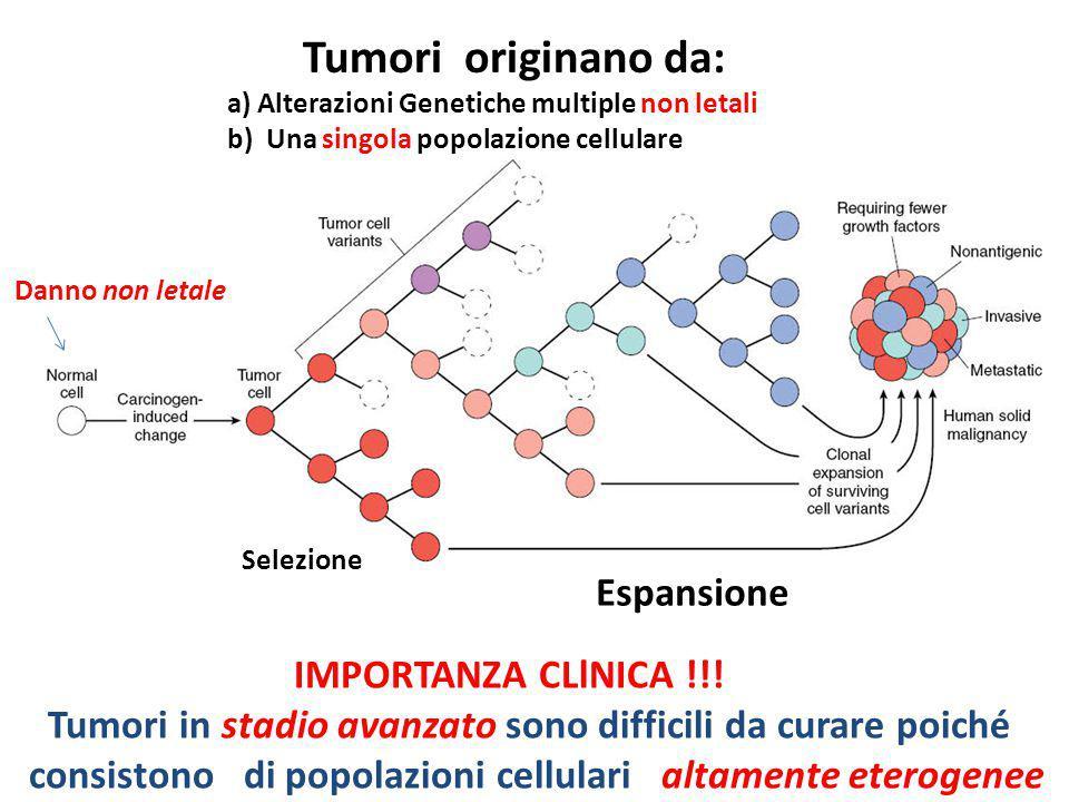 Danno non letale IMPORTANZA CLlNICA !!! Tumori in stadio avanzato sono difficili da curare poiché consistono di popolazioni cellulari altamente eterog