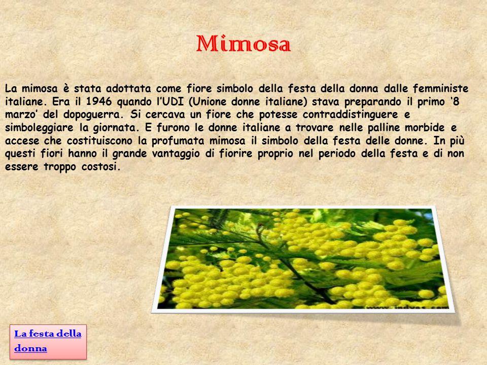 Mimosa La mimosa è stata adottata come fiore simbolo della festa della donna dalle femministe italiane. Era il 1946 quando l'UDI (Unione donne italian