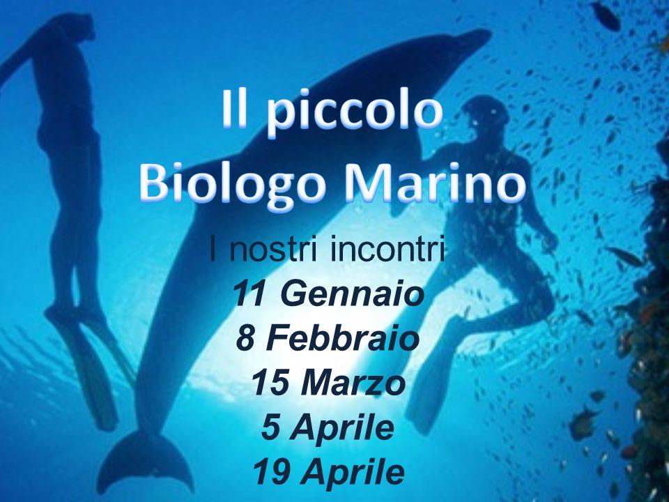 Introduzione Che cosa è la biologia marina.