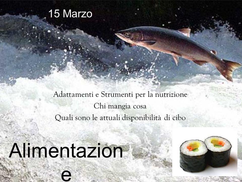 Adattamenti e Strumenti per la nutrizione Chi mangia cosa Quali sono le attuali disponibilità di cibo Alimentazion e 15 Marzo
