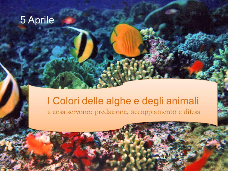 I Colori delle alghe e degli animali a cosa servono: predazione, accoppiamento e difesa I Colori delle alghe e degli animali a cosa servono: predazione, accoppiamento e difesa 5 Aprile