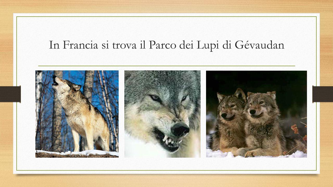 In Francia si trova il Parco dei Lupi di Gévaudan