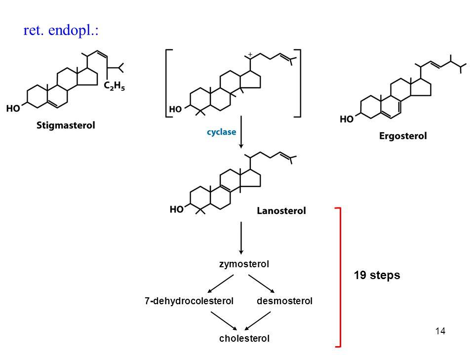 15 mevalonato isopentenil-PPdimetilallil-PP geranil-PP isopentenil-PPfarnesil-PP squalenefarnesil-PP unità isoprenoidi attivate monoterpene sesquiterpene triterpene colesterolo lanosterolo Bilancio: 18 acetil-CoA 18 ATP 16 NADPH sintesi: 800 mg/die dieta: 300-500 mg/die