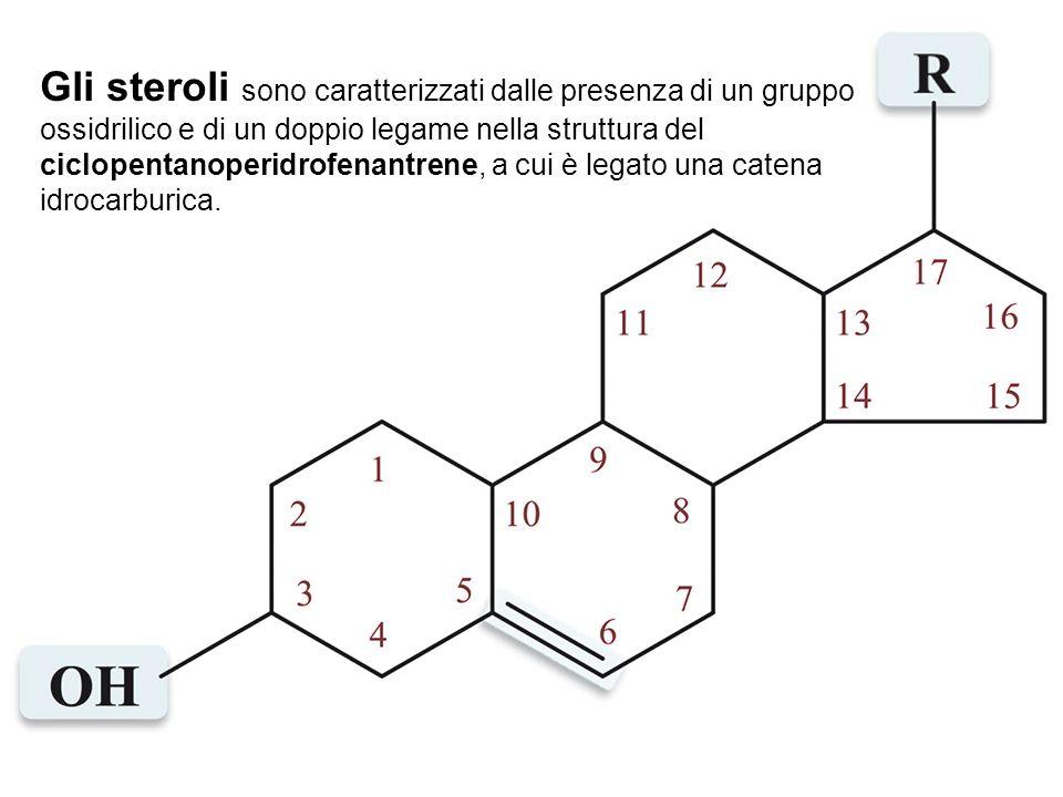 Gli steroli sono caratterizzati dalle presenza di un gruppo ossidrilico e di un doppio legame nella struttura del ciclopentanoperidrofenantrene, a cui