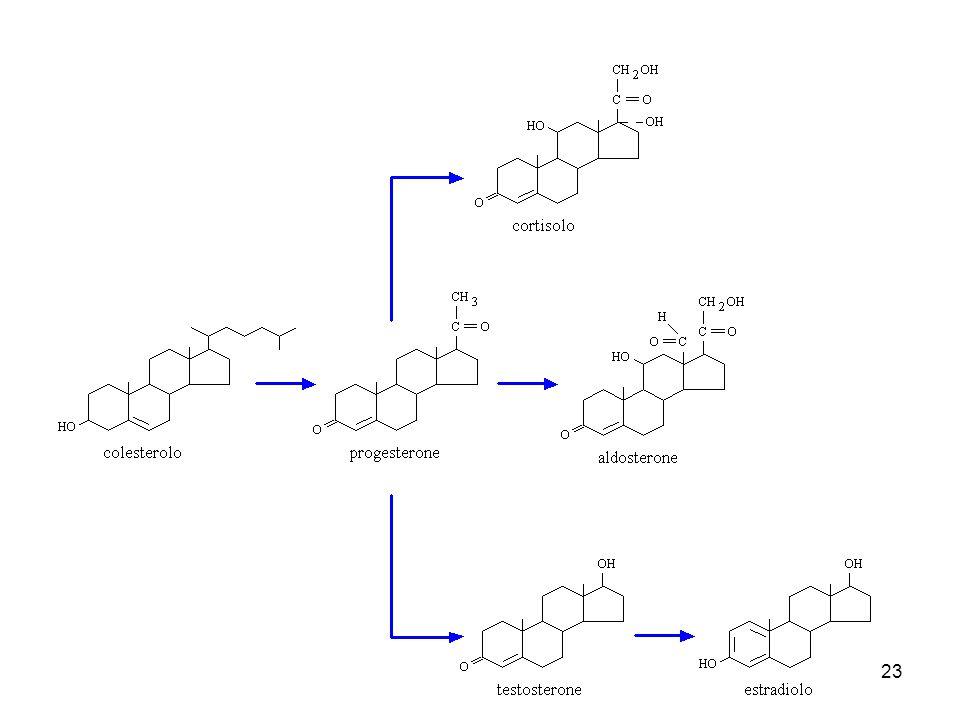 24 isopentenil-PP colesterolo acidi biliari vitamina Dormoni steroidei ubichinone vitamina A vitamina E vitamina K dolicoli carotenoidi gomma, olii essenziali fitolo (clorofilla) isoprenilazione di proteine Panoramica della biosintesi degli isoprenoidi : hanno tutti come precursore l'isopentenil pirofosfato
