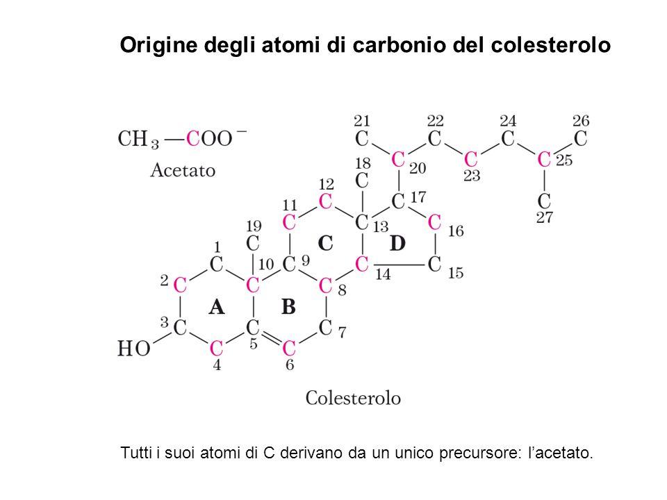 Origine degli atomi di carbonio del colesterolo Tutti i suoi atomi di C derivano da un unico precursore: l'acetato.