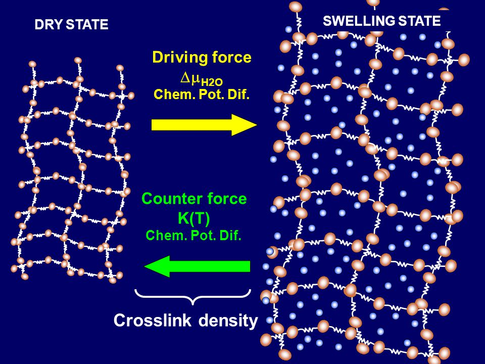 DRY STATE Driving force  H2O Chem. Pot. Dif. Counter force K(T) Chem. Pot. Dif. SWELLING STATE Crosslink density