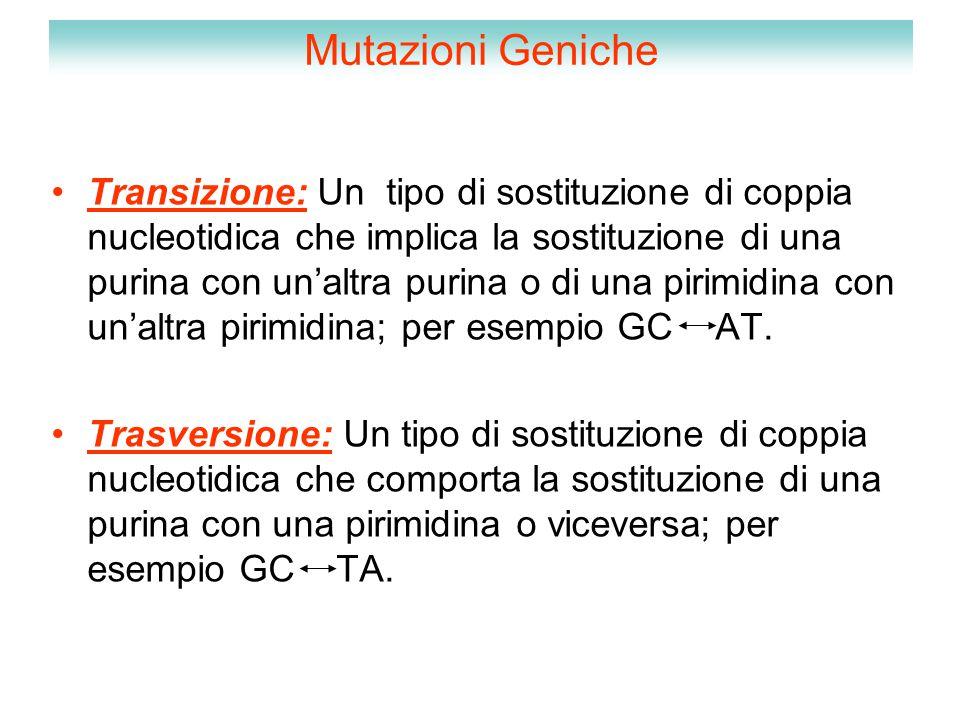 Mutazioni Geniche Transizione: Un tipo di sostituzione di coppia nucleotidica che implica la sostituzione di una purina con un'altra purina o di una p