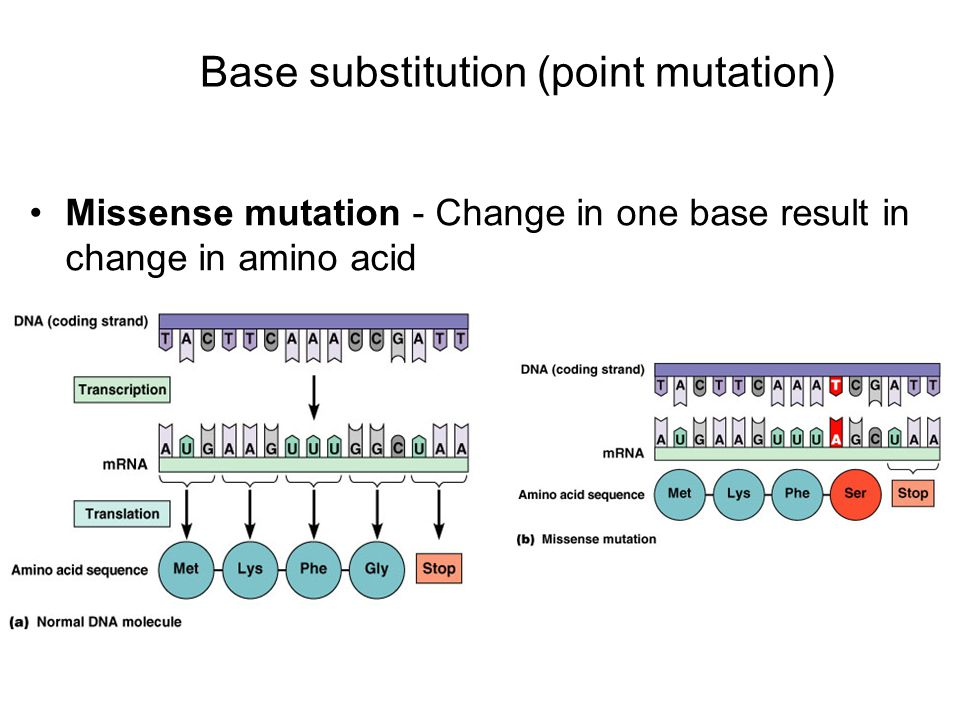 Missense mutation - Change in one base result in change in amino acid Base substitution (point mutation)