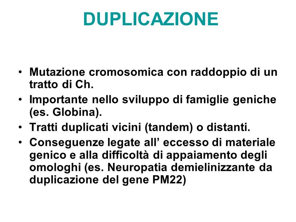 DUPLICAZIONE Mutazione cromosomica con raddoppio di un tratto di Ch. Importante nello sviluppo di famiglie geniche (es. Globina). Tratti duplicati vic