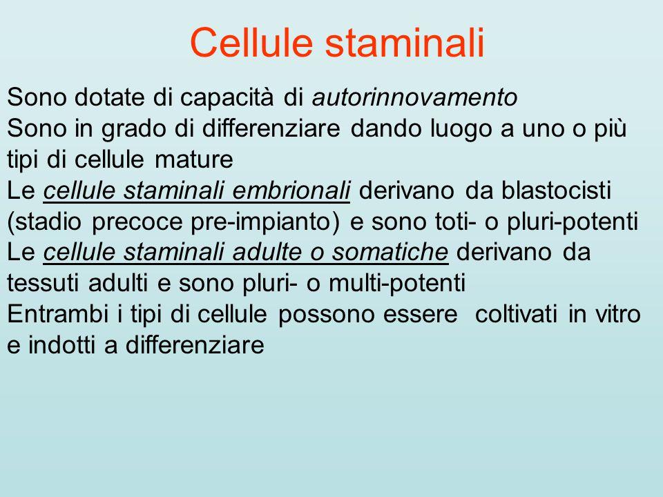 Cellule staminali Sono dotate di capacità di autorinnovamento Sono in grado di differenziare dando luogo a uno o più tipi di cellule mature Le cellule