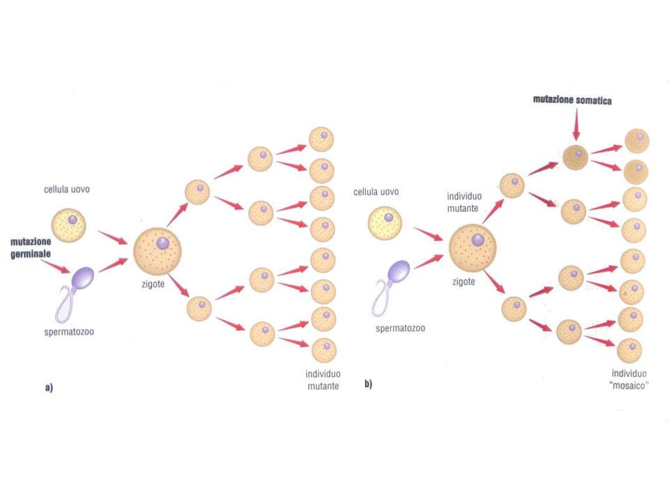 Frameshift mutation - Insertion or deletion of one or more nucleotide pairs Mutation – deletion and insertion