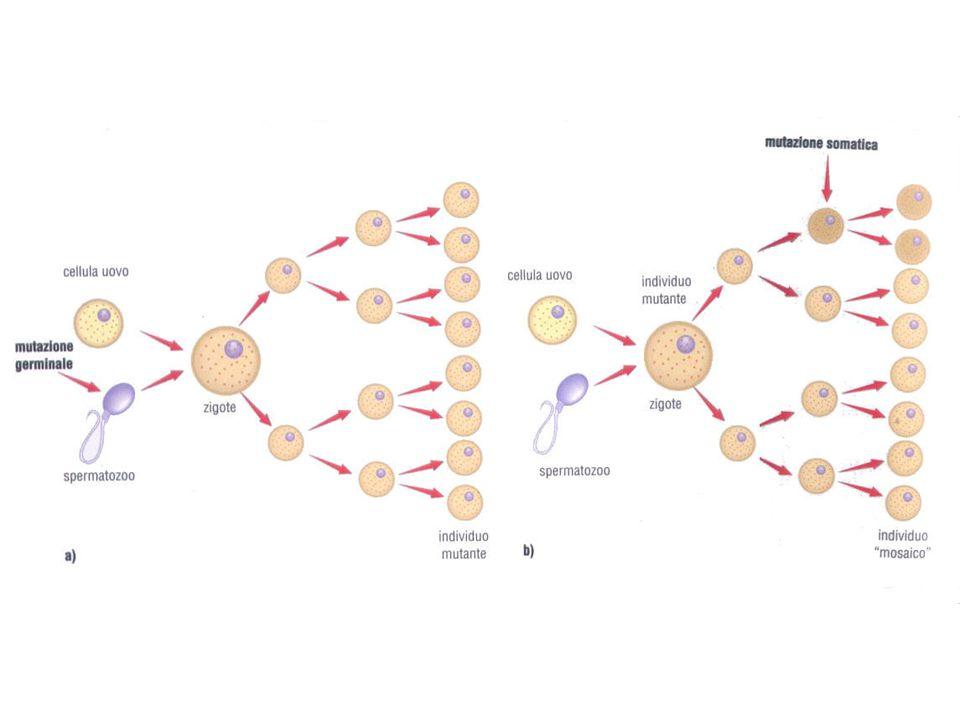 MUTAGENI Mutageni fisici:raggi-X e raggi Ultravioletti.