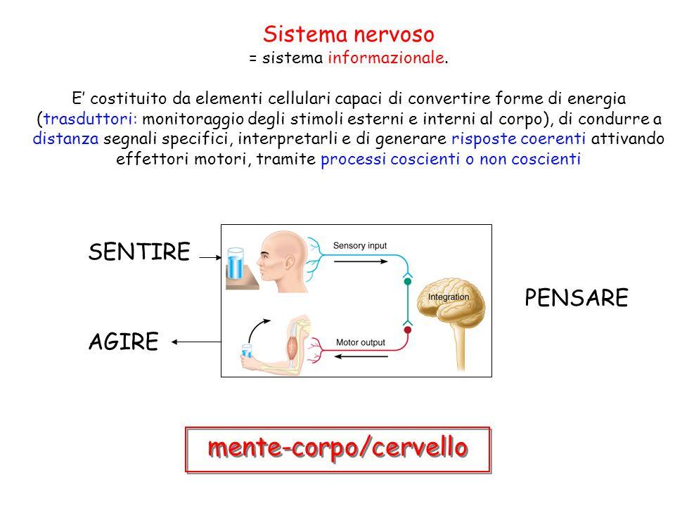 Sistema nervoso = sistema informazionale. E' costituito da elementi cellulari capaci di convertire forme di energia (trasduttori: monitoraggio degli s