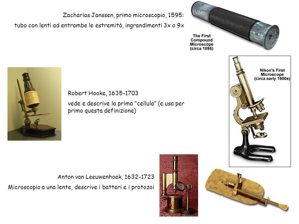 Anton van Leeuwenhoek, 1632-1723 Microscopio a una lente, descrive i batteri e i protozoi Zacharias Janssen, primo microscopio, 1595: tubo con lenti a