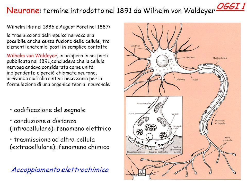 codificazione del segnale conduzione a distanza (intracellulare): fenomeno elettrico trasmissione ad altra cellula (extracellulare): fenomeno chimico