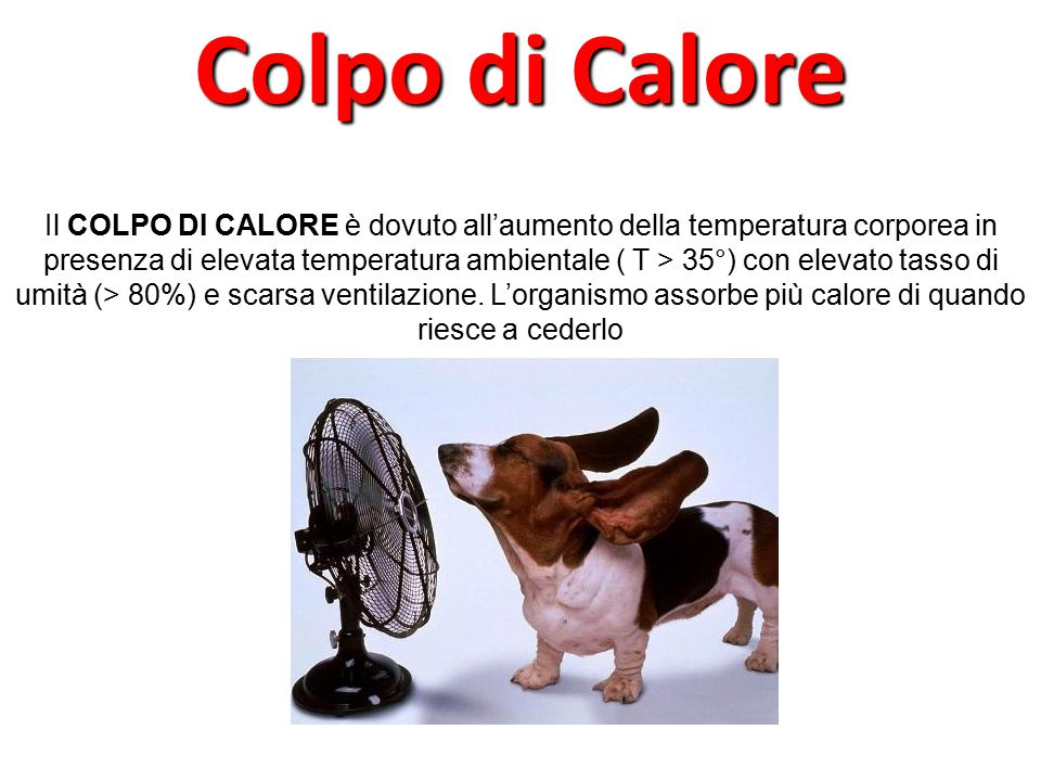 Il COLPO DI CALORE è dovuto all'aumento della temperatura corporea in presenza di elevata temperatura ambientale ( T > 35°) con elevato tasso di umità (> 80%) e scarsa ventilazione.