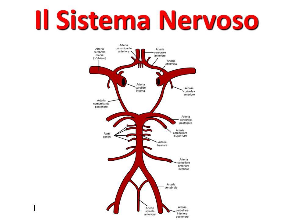 Perdite di coscienza transitoria (lipotimia, sincope) Perdite di coscienza profonde (coma) Urgenze cerebro-vascolari (ictus)Patologie