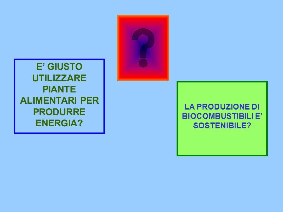 E' GIUSTO UTILIZZARE PIANTE ALIMENTARI PER PRODURRE ENERGIA.