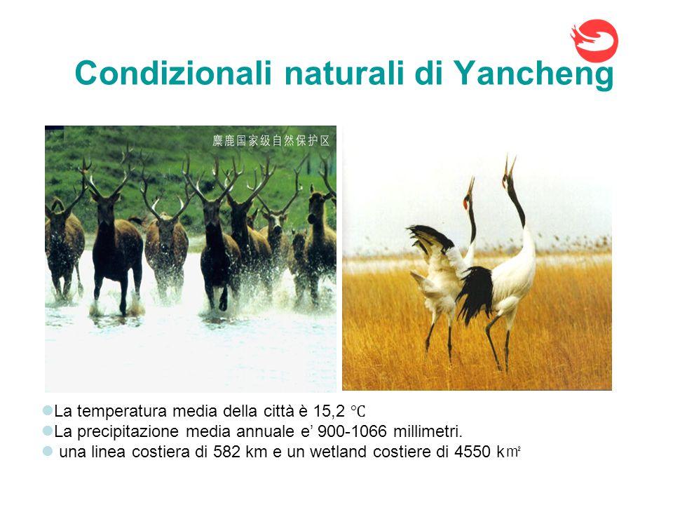 Traffico di Yancheng Yancheng si trova al confine tra nord e sud della Cina, e' una citta' centrale di Shanghai economico circle che e' la zona economica piu' dinamica della Cina.