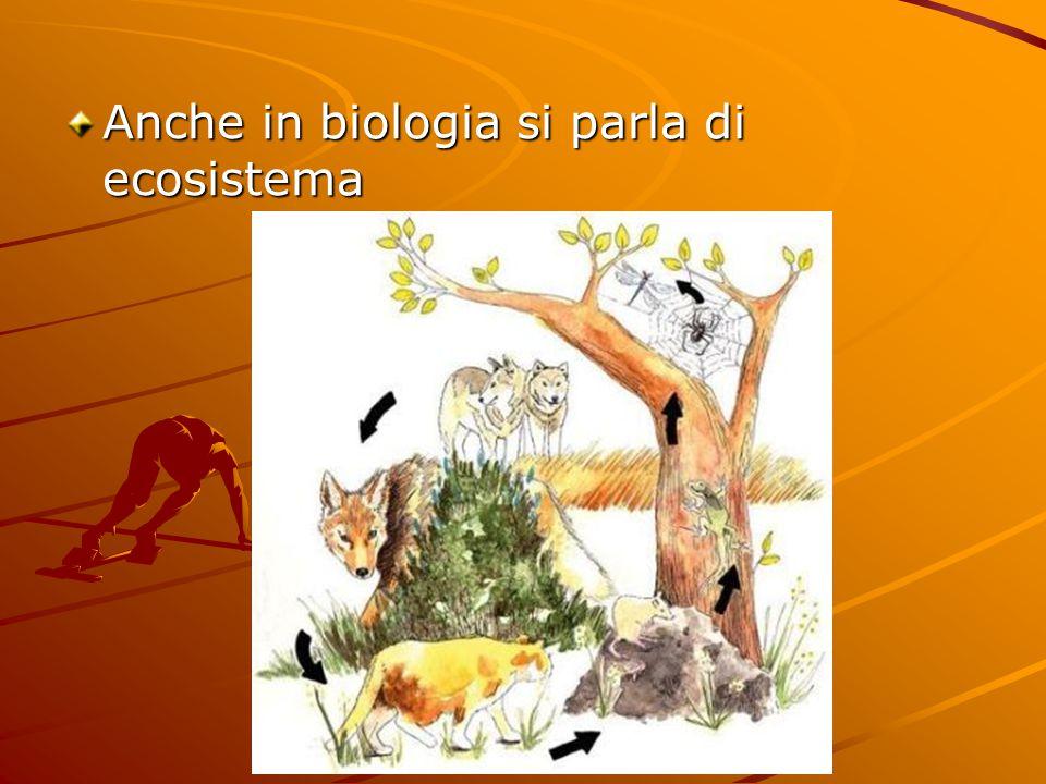 Anche in biologia si parla di ecosistema
