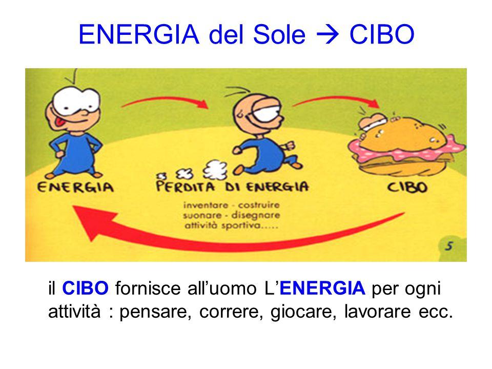 ENERGIA del Sole  CIBO il CIBO fornisce all'uomo L'ENERGIA per ogni attività : pensare, correre, giocare, lavorare ecc.