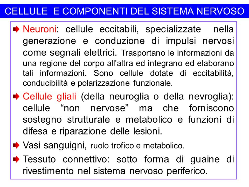 CELLULE E COMPONENTI DEL SISTEMA NERVOSO Neuroni: cellule eccitabili, specializzate nella generazione e conduzione di impulsi nervosi come segnali ele