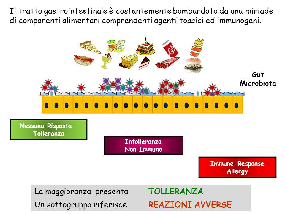 Il tratto gastrointestinale è costantemente bombardato da una miriade di componenti alimentari comprendenti agenti tossici ed immunogeni. Immune-Respo