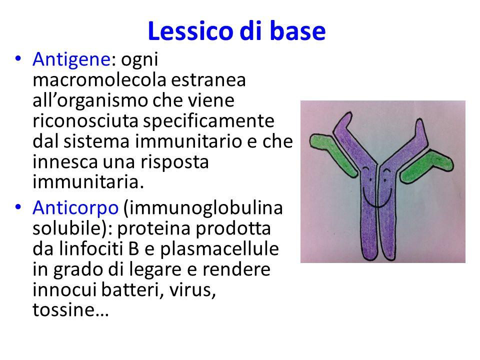 Tutti i componenti dell'immunità innata concorrono per stabilire l'INFIAMMAZIONE Bisogna modificare l'ambiente per favorire l'eliminazione del patogeno e consentire la riparazione del tessuto Mediatori (istamina, serotonina, citochine,…) Vasodilatazione Aumento permeabilità Chemiotassi Adesione leucociti all'endotelio  diapedesi e migrazione verso il focolaio Contenere l'infiammazione N.B.