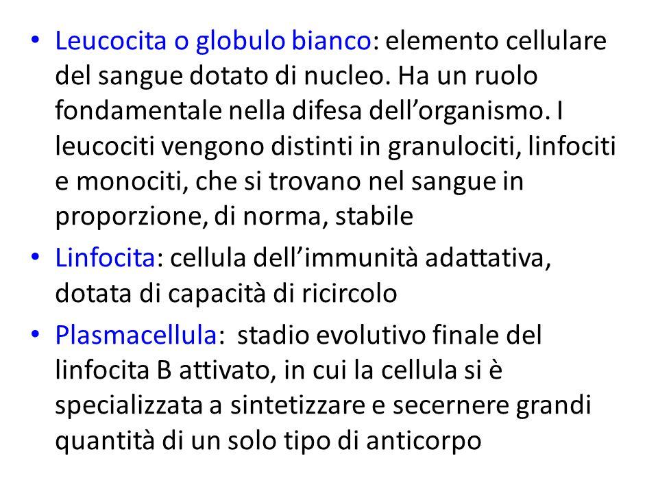 Leucocita o globulo bianco: elemento cellulare del sangue dotato di nucleo.