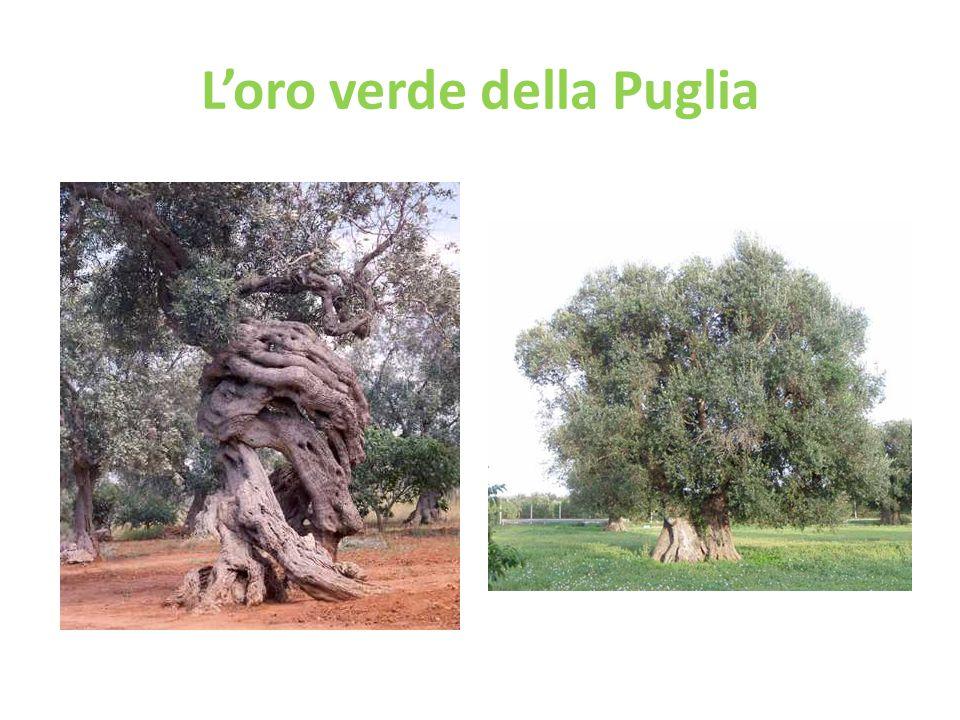 L'oro verde della Puglia