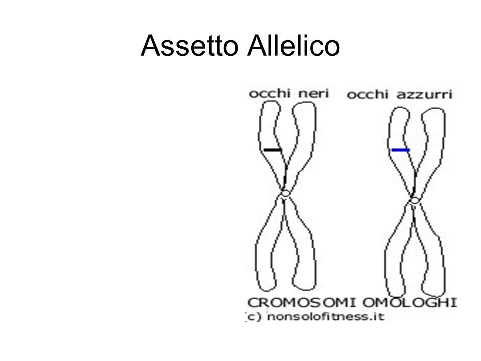 Assetto Allelico