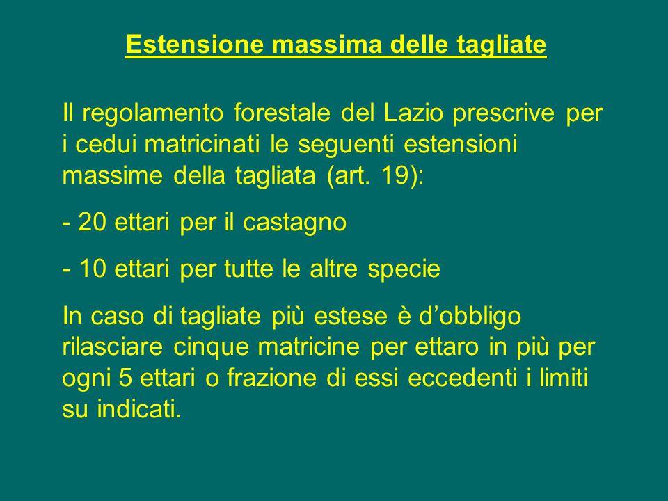 Estensione massima delle tagliate Il regolamento forestale del Lazio prescrive per i cedui matricinati le seguenti estensioni massime della tagliata (