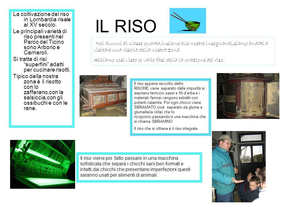 IL RISO La coltivazione del riso in Lombardia risale al XV secolo. Le principali varietà di riso presenti nel Parco del Ticino sono Arborio e Carnarol