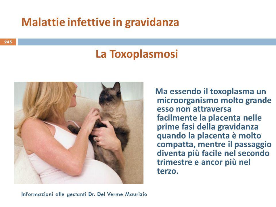 245 Informazioni alle gestanti Dr. Del Verme Maurizio La Toxoplasmosi Ma essendo il toxoplasma un microorganismo molto grande esso non attraversa faci