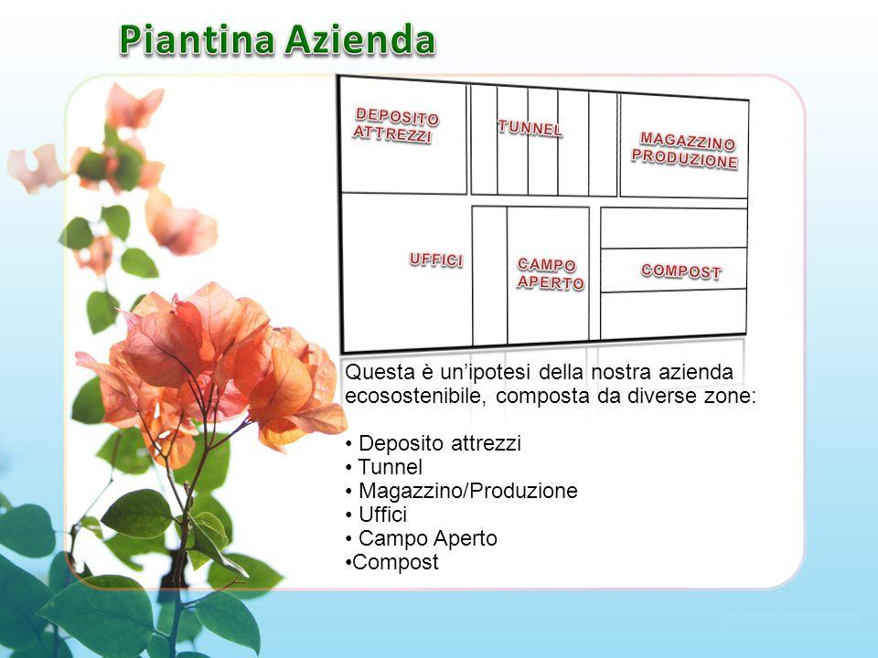 Questa è un'ipotesi della nostra azienda ecosostenibile, composta da diverse zone: Deposito attrezzi Tunnel Magazzino/Produzione Uffici Campo Aperto Compost