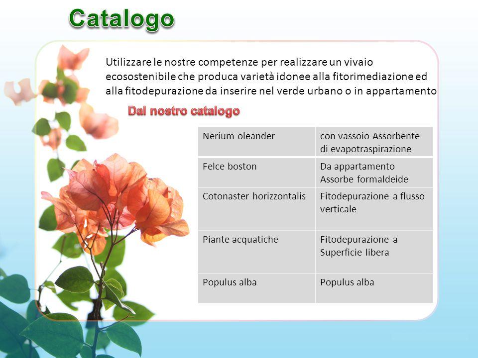 Chioma: sempreverde Fiore: sono a stella, bianchi o rosa.