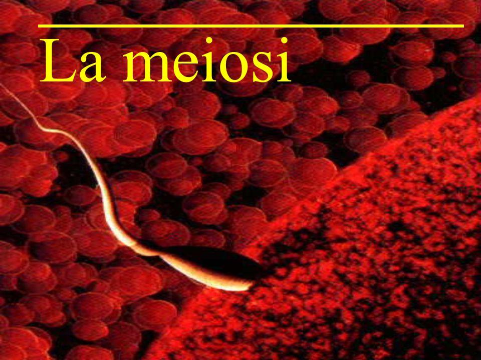 La meiosi