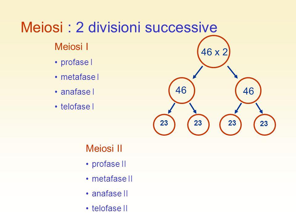 Meiosi : 2 divisioni successive Meiosi I profase I metafase I anafase I telofase I Meiosi II profase II metafase II anafase II telofase II 23 46 x 2 4